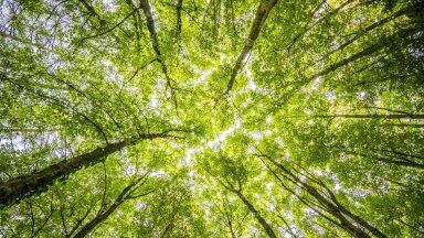 METSAKONVERENTS | Metsatööstuse panus rohepöörde ja kliimaneutraalsuse saavutamisel