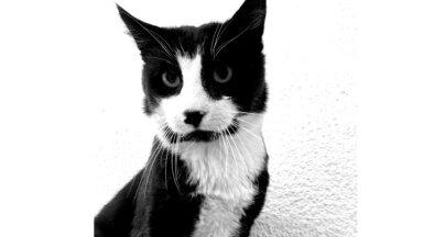 Kass Tom