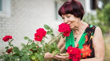 Marje Metsur kadunud abikaasa Kaupo tellitud roosiga, mis algul pigem närbumise märke näitas, aga sel aastal väga võimsana õide on puhkenud.