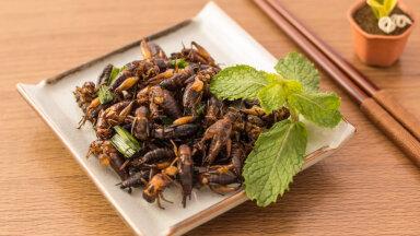 PIMETEST | Putukatest tehtud toit pole enam ulme! Selgitame välja, kas see ka maitseb hästi