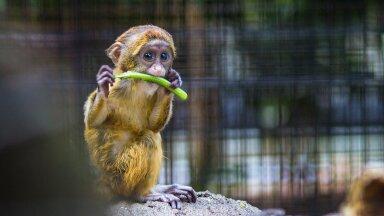 Пенсионер подарил детям 33 333 билета в зоопарк