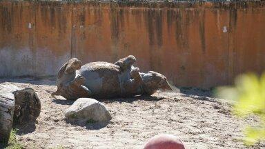 ВЕСЕЛЫЕ ФОТО | Носорог из Таллиннского зоопарка наслаждается косметическими процедурами