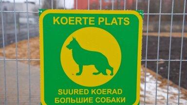 В Таллинне садист разбрасывает на игровой площадке мясо с иголками. Одна собака уже погибла