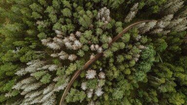 Üraskikahjustused Karula rahvuspargi aladel