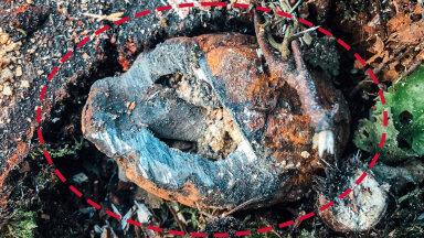 FOTO   Metsamees jäi napilt ellu: harvesteri ette sattus granaat