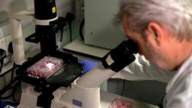 Kuidas illustreerida nähtamatut? Pildiga mikroskoobi kasutamisest. (foto: AFP / Scanpix)