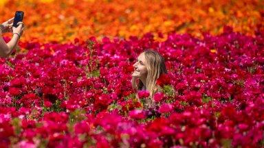 ФОТО   Все краски этой весны: лютиковые поля Карлсбада
