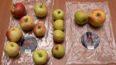 Vasakul sordita õunad, keskel ehtne 'Liivi kuldrenett', paremal 'Kuldrenetina 'müüdud õunad, mille tegelik sort ja päritolu on teadmata.