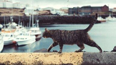 Osa kasse võetakse majapidamisse hiireküttideks
