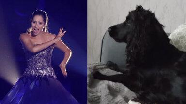 VIDEO | Nalja nabani! Vahva koer üritab Elina Nechayeva kombel kõrgeid noote kätte saada