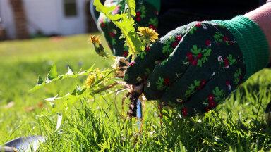 Народное средство — эта смесь уничтожит все сорняки в саду!
