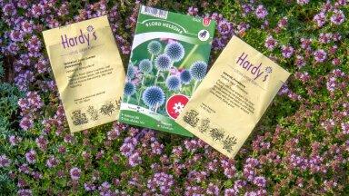 Kolm lilleseemnepakki: viltjas vägihein 'Arctic Summer', ungari mesiohakas ja suur tähtputk 'Primadonna'.