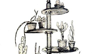 Kaktuste järi lubab pöörata taimi päikese poole (1934).