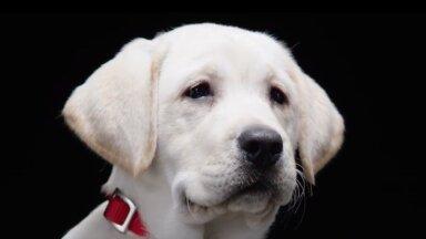 Kvaliteetne toit on koera tervise ja heaolu vundament