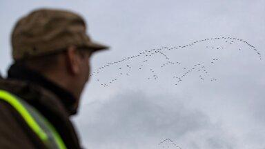 Lennujaama ornitoloog 18.10.2019
