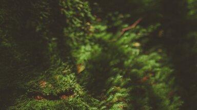 KUULA I Just need väetised turgutavad ja kaitsevad taimi