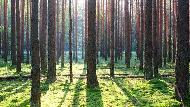 Sõltumatu hindamise jõud – Metsaekspert