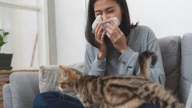 Kümme nippi, kuidas kassiallergiaga toime tulla