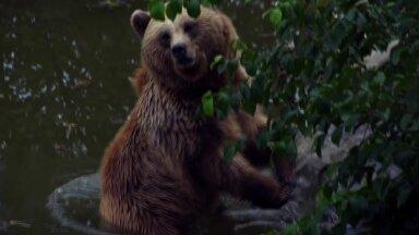 VIDEO   Ettevaatust! Tervisesportlased ja matkajad kohtavad metsaradadel aina tihedamini karu