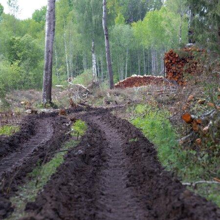Eesti metsa majandavad suures osas taanlased.