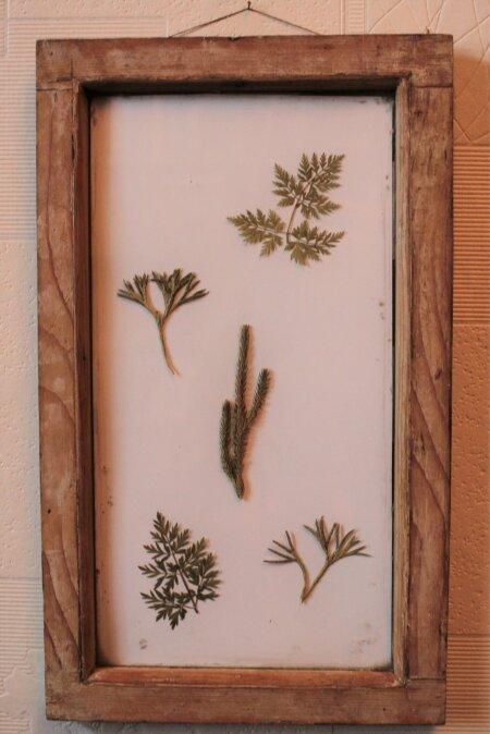 Õigesti kuivatatud taimed säilivad kas või igavesti.