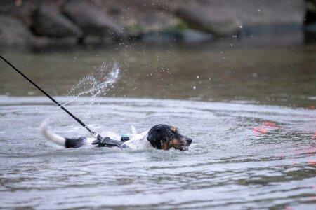 Esimese supluse linnahalli juures tegi teiste seas koer Iggy Pup, kes eelistab küll vett hammustada, aga pole põhimõtteliselt vastu ka selles ujumisele.