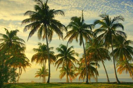 Troopiline rand