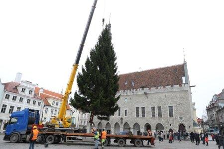 Jõulukuusk jõudis Raekoja platsile