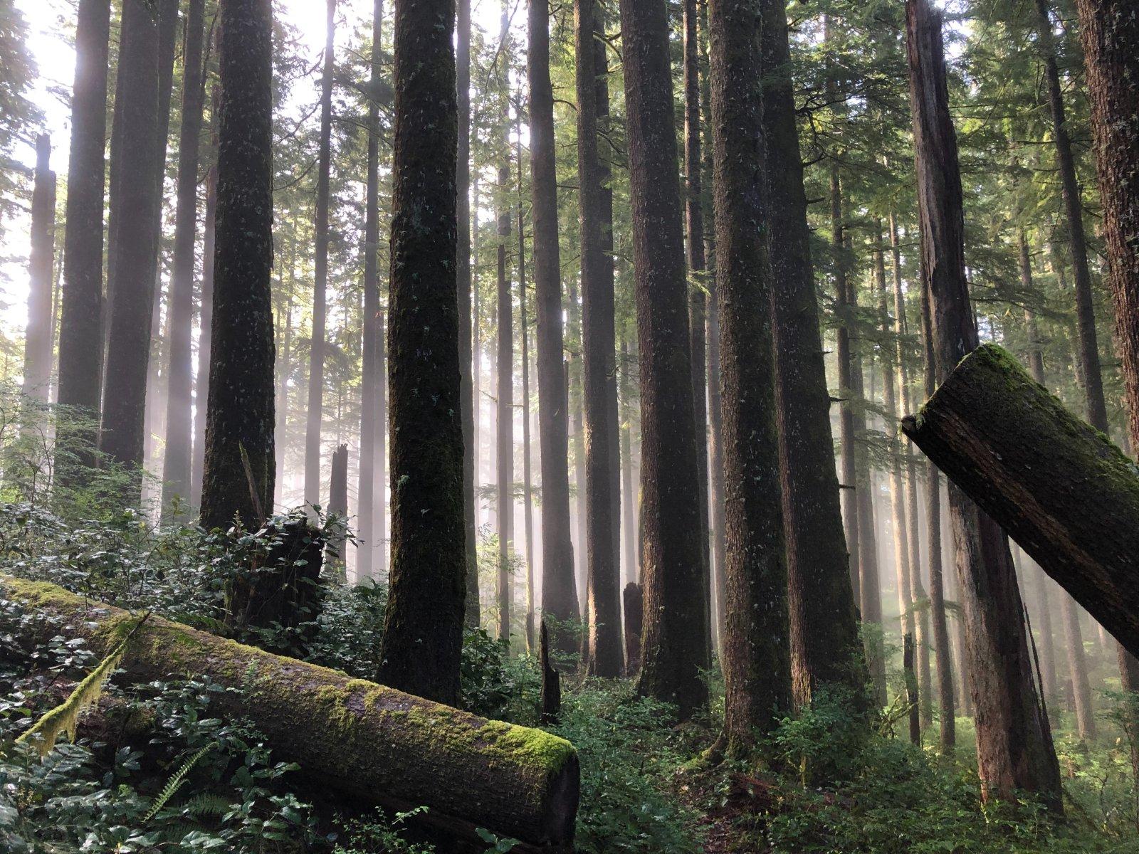 ARVAMUS | Kui vana on vana mets ja kas see seob süsinikku või eritab seda?:
