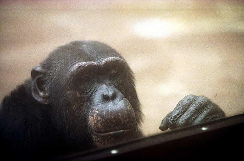 Inimlikud tunded:  loomaaia elanikudki igatsevad karantiinis olles sõpru